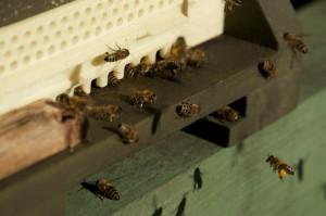 Honigeimer